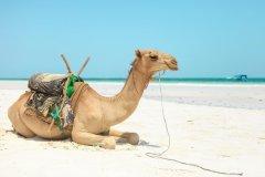 Fotoserie Kenia Kamel am Strand