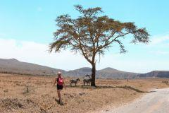 Fotoserie Kenia Zebras Safari