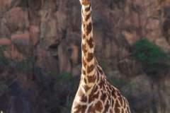 fotoserie-kenia-reisefotografie-121-von-161