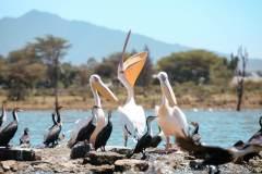 Fotoserie Kenia Pelikane und Vögel