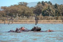 Fotoserie Kenia Nilpferde