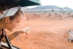 Fotoserie Kenia Safari mit Löwe