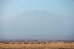 Fotoserie Kenia Amboseli Nationalpark
