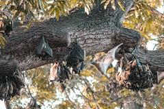 Fotoserie Kenia Fledermäuse