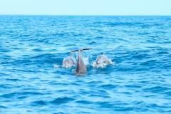 Fotoserie Kenia Delfine