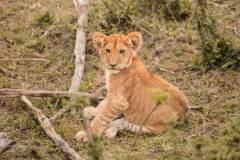 Fotoserie Kenia Babylöwe