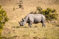 Fotoserie Kenia Nashorn