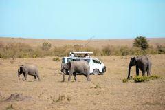 Fotoserie Kenia Elefanten vor dem Safariauto