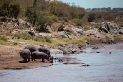 Fotoserie Kenia Nilpferde am Fluss