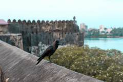 Fotoserie Kenia Fort Jesus