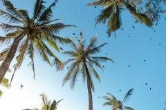 Fotoserie Kenia Palmen