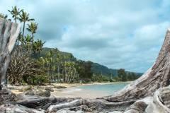 Fotoserie Hawaii Baumstumpf Strand