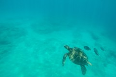 Fotoserie Hawaii Schildkröte Schnorcheln