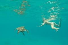 Fotoserie Hawaii Schwimmen mit Schildkröten