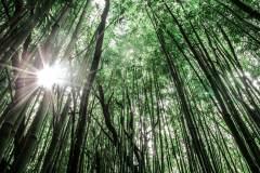 Fotoserie Hawaii Wald