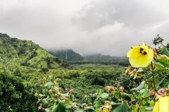 Fotoserie Hawaii Blumenblick